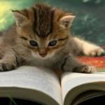 どうしたらお金持ちになれるの!?お金持ちになる方法は本から学ぼう